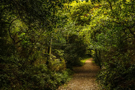 Beautiful natural tunnel made up from green tree branches in a forest scene Banco de Imagens