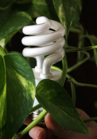 Compact Fluorescent Light Bulb Фото со стока