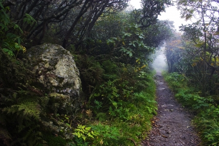 Trail in Craggy Gardens