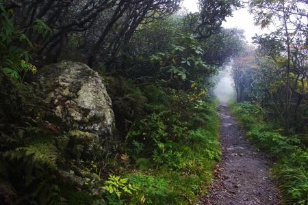 craggy: Trail in Craggy Gardens