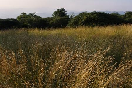blue ridge: Field in Craggy Gardens on the Blue Ridge Parkway  Stock Photo