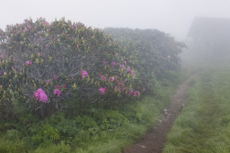 craggy: A foggy trail in Craggy Gardens Stock Photo
