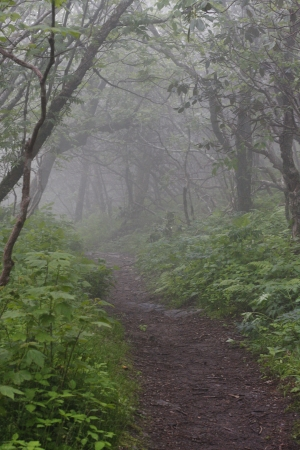 Foggy trail in Craggy Gardens Stock Photo - 18134452