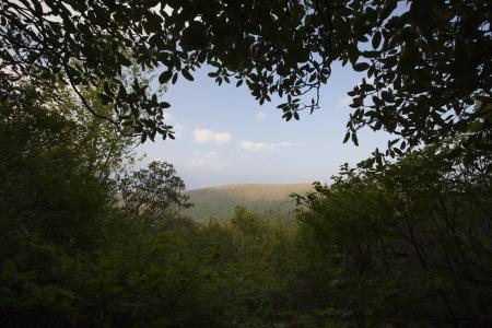 Scenic from the Black Balsam area in Western North Carolina