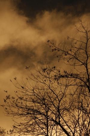 A winter sky at dusk