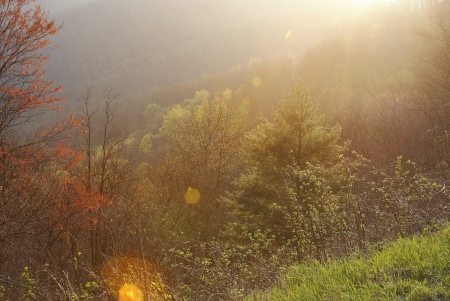 Springtime Sunshine in the Blue Ridge Mountains Stock Photo - 18285741