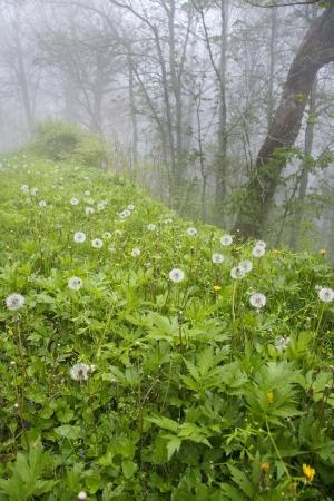 Dead Dandelions in the fog Stock Photo - 18651802