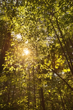 Sunlight shining through a forest canopy Stock Photo