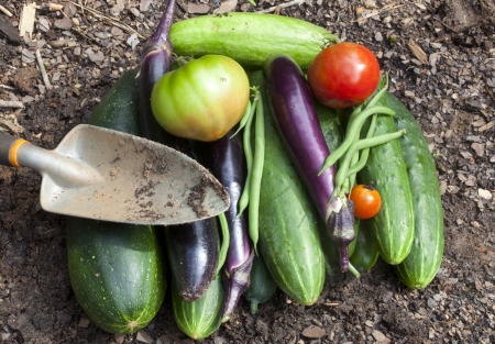 homegrown: A bounty of freshly picked homegrown garden vegetables