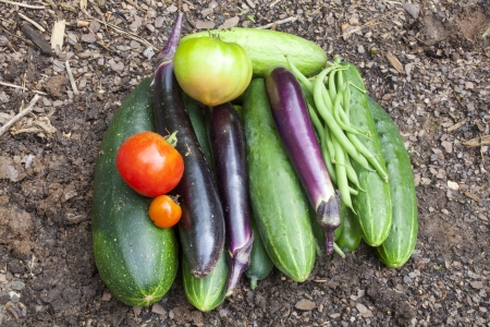 bounty: A bounty of freshly picked homegrown garden vegetables