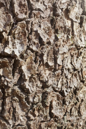 A close up on tree bark texture.
