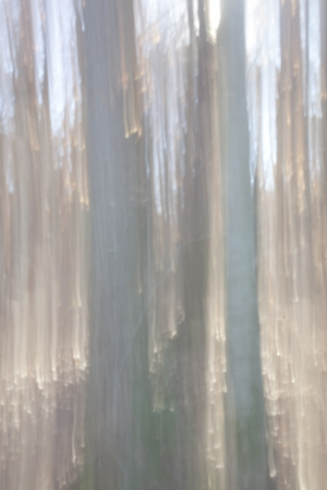 Abstract Impresion of a Forest with motion blur Stock Photo