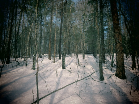 A filtered view of a snow covered forest. Stock Photo