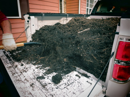 Getting garden mulch out of a truck with pitch fork  photo