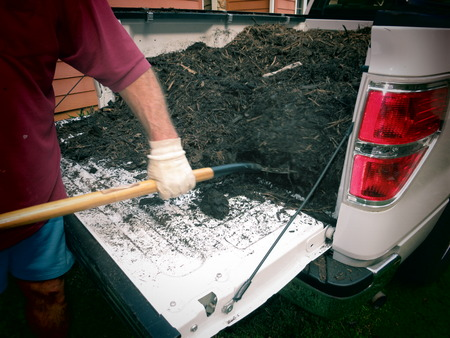 Getting garden mulch out of a truck with pitch fork  Stock Photo