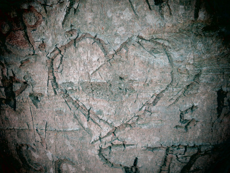 A filtered photo background of a heart carved into the bark of a beech tree. photo