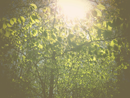 trippy: A filtered photo background of spring foliage on trees in the Piedmont region of North Carolina  Stock Photo