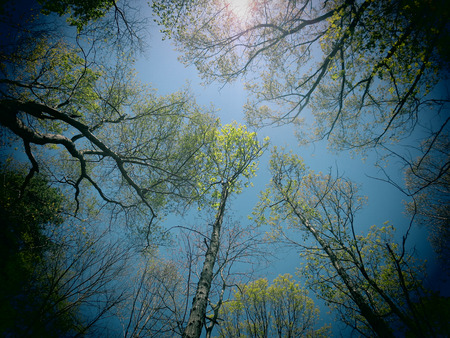 A filtered photo background of spring foliage on trees in a North Carolina forest
