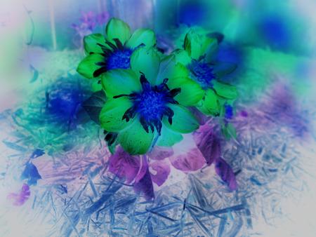 Psychedelic digital photo manipulation of Dahlia flowers