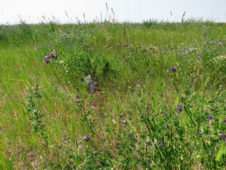 Tall grass and weeds overgrown in a field. photo