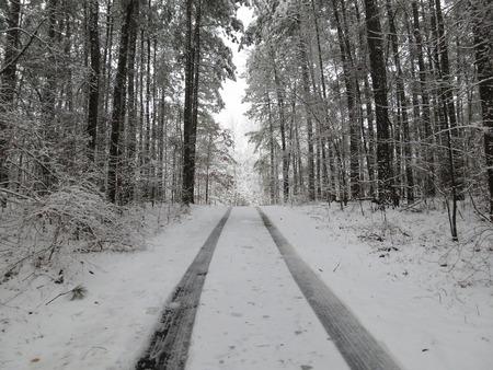 huellas de llantas: Huellas de los neum�ticos frescos en un nevado de caminos rurales a trav�s de un bosque