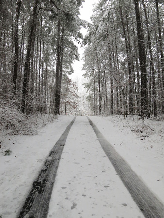 icy conditions: Fresh tire tracks on a snow covered rural road through a forest