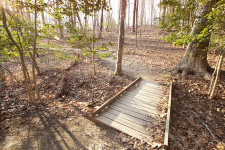 Hiking trail in Lake Norman State Park in North Carolina.