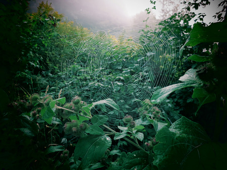 jungle scene: A foggy morning view of a spider web in the Berkshire Mountains of Western Massachusetts. Stock Photo