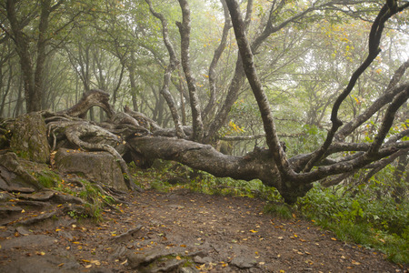 dreamscape: A gnarled old tree in the Blue Ridge Mountains of Western North Carolina. Stock Photo