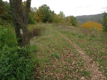 Scene along the Appalachian Trail