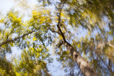 A motion blurred background image of a view through forest canopy.