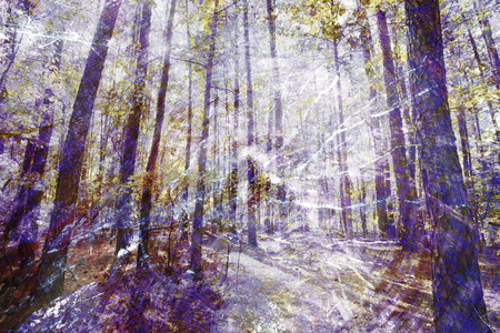 composite image: An abstract impressionistic background composite image of a forest scene.