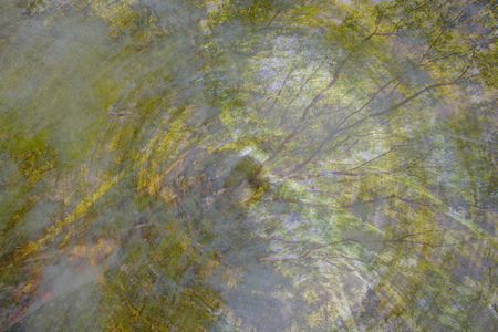 multiple exposure: An abstract impressionistic background composite image of a forest scene.