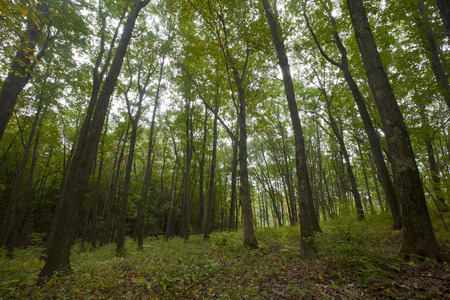 berkshire: A forest scene in the Berkshire Mountains of Western Massachusetts. Stock Photo