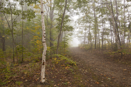 berkshire: A foggy autumn morning in Springside Park in the Berkshire Mountains of Western Massachusetts.