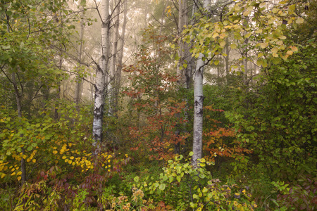 dreamscape: A foggy autumn morning in Springside Park in the Berkshire Mountains of Western Massachusetts.