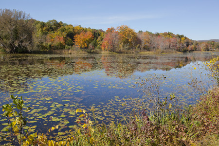 berkshire: An autumn view of a swamp in the Berkshire Mountains of Western Massachusetts.