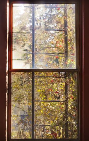 shinning light: An abstract out an old window view of light shinning though overgrown foliage Stock Photo