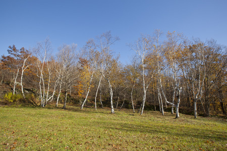 berkshire: An autumn view of a forest in the Berkshire Mountains of Western Massachusetts.