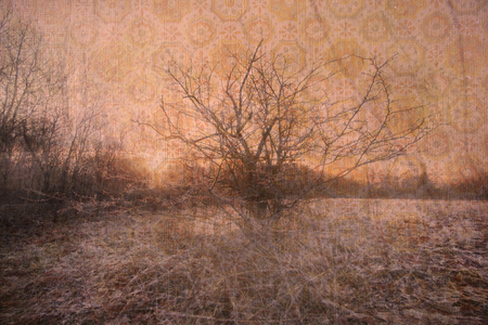 A warm toned abstract background photo composite of a bare tree in a field. Stock Photo