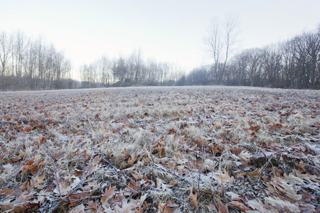 berkshire: A frosty winter morning view in the Berkshire Mountains of Western Massachusetts.