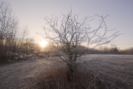 berkshire: A frosty sunrise view in the Berkshire Mountains of Western Massachusetts.