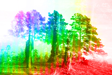 A colorful abstract background image of a coniferous forest. 版權商用圖片 - 84993844