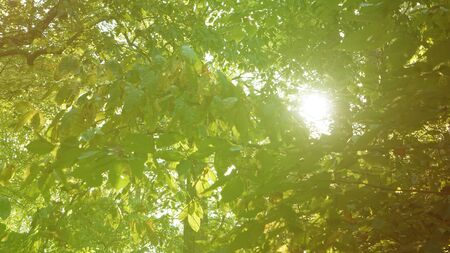 A warm toned view of sunlight shining through a forest canopy.