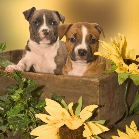 two puppies Archivio Fotografico