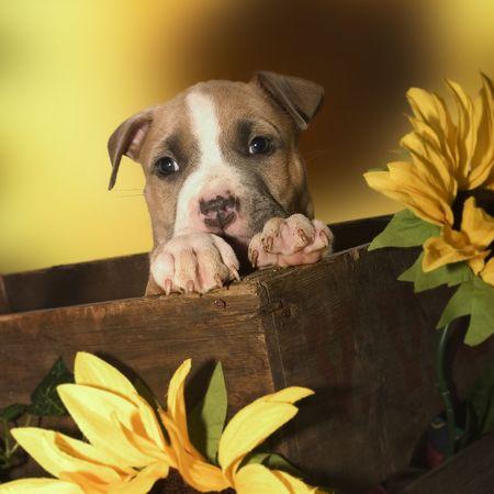 puppy hiding
