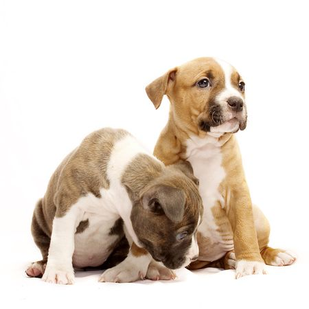 cute puppies  Stockfoto