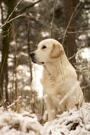 doggy in the snow