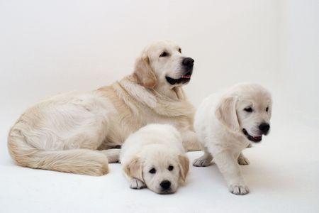 adorable doggies