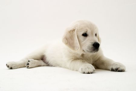 sweet little puppy Stock Photo